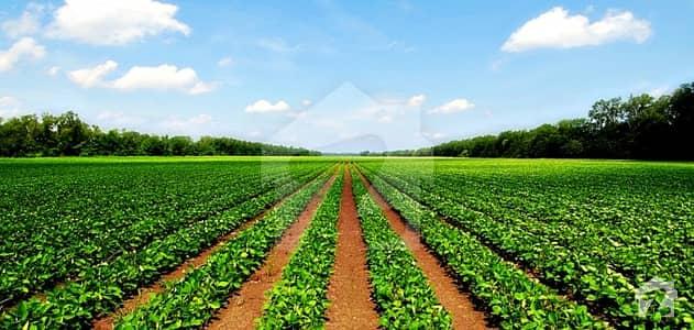 میرپور ساکرو غلام اللہ روڈ میرپورسا کرو میں 400 کنال زرعی زمین 1.5 کروڑ میں برائے فروخت۔
