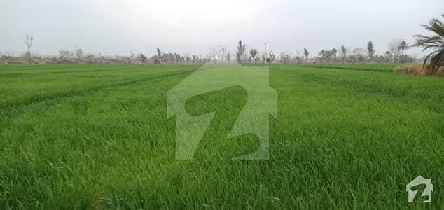 ادرز كوٹ ادُّو میں 40 کنال زرعی زمین 1.25 کروڑ میں برائے فروخت۔