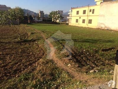 بلیاہ محلہ کوٹلی میں 10 مرلہ رہائشی پلاٹ 65 لاکھ میں برائے فروخت۔