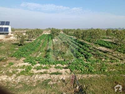 کوٹ رادھا کِشن قصور میں 3416 کنال زرعی زمین 68.32 کروڑ میں برائے فروخت۔