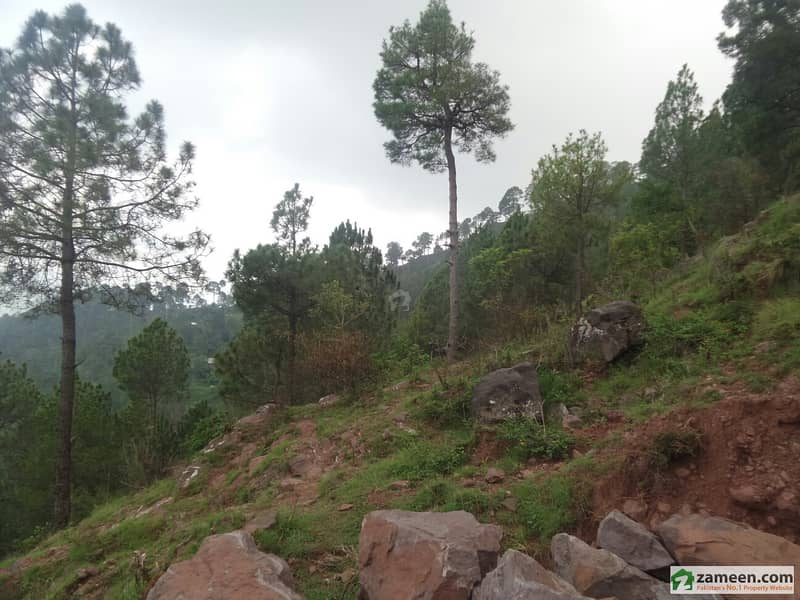 100 Kanal Land In Murree