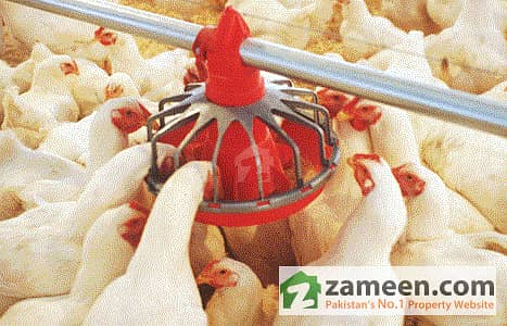 A Poultry Controlled Shed for Sale situated at Nawab Pur Multan