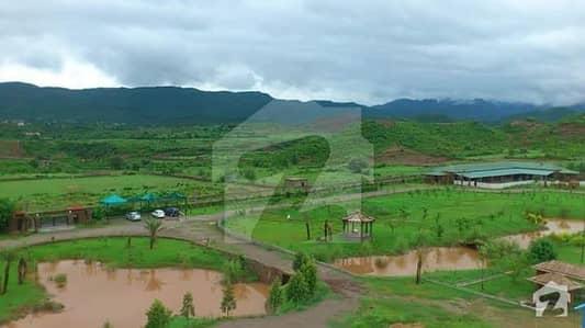 40 Kanal Fully Maintained Farm House In Agro Fram House Cattle Farm House