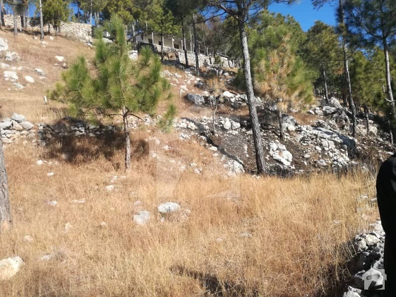 10 Kanal Land For Sale