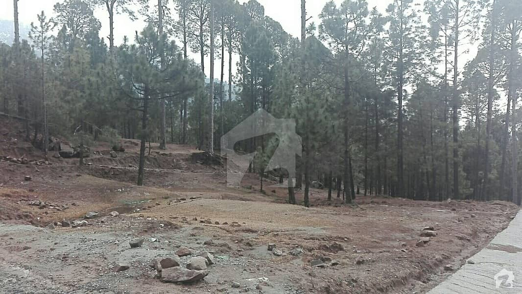 Plots Available For Sale On  Angoori Road Muree