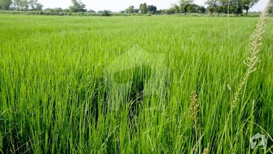 48 Acre Fully Agriculture Land Available For Investment At Jarranwala Road To Sityana Road Faisalabad