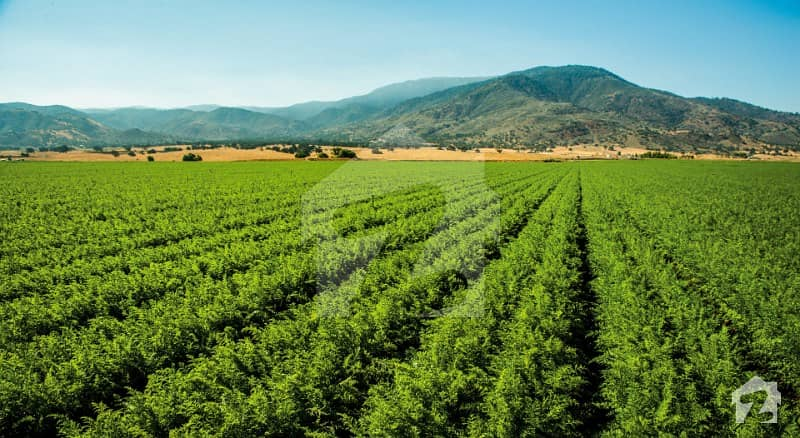 بلیو ورلڈ سٹی چکری روڈ راولپنڈی میں 16 کنال زرعی زمین 2.3 کروڑ میں برائے فروخت۔