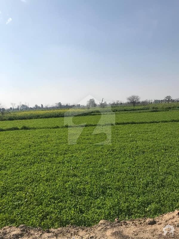فیروزپور روڈ لاہور میں 216 کنال زرعی زمین 17.55 کروڑ میں برائے فروخت۔