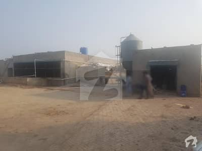 Egg Layer Farm With Automatic Machine System - Factory For Sale