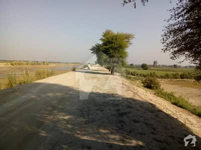 61 Bigha Agricultural Land For Sale In Raikh Bigha Wala Near Head Talai