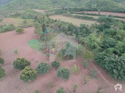 سملی ڈیم روڈ اسلام آباد میں 52 کنال زرعی زمین 8.5 کروڑ میں برائے فروخت۔