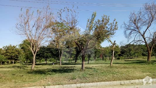 500 Sq Yard Plot For Sale In G-14/3