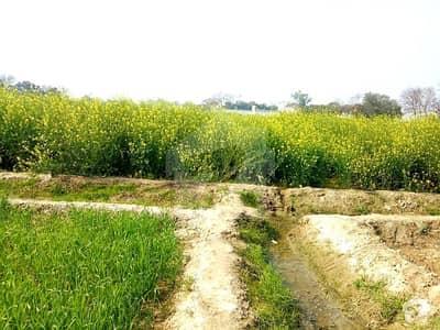 گرموک سنگھ والا قصور میں 68 کنال زرعی زمین 1.6 کروڑ میں برائے فروخت۔