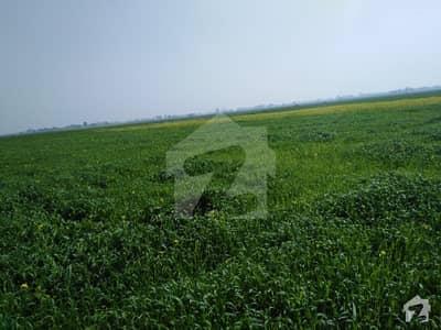 16 Kanal Agricultural Land For Sale