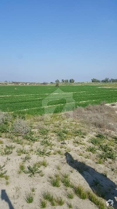 ادرز كوٹ ادُّو میں 237.16 کنال زرعی زمین 1.23 کروڑ میں برائے فروخت۔