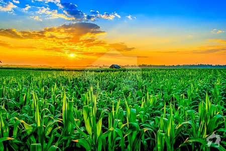 اوکاڑہ بائی پاس روڈ اوکاڑہ میں 68 کنال زرعی زمین 96 لاکھ میں برائے فروخت۔