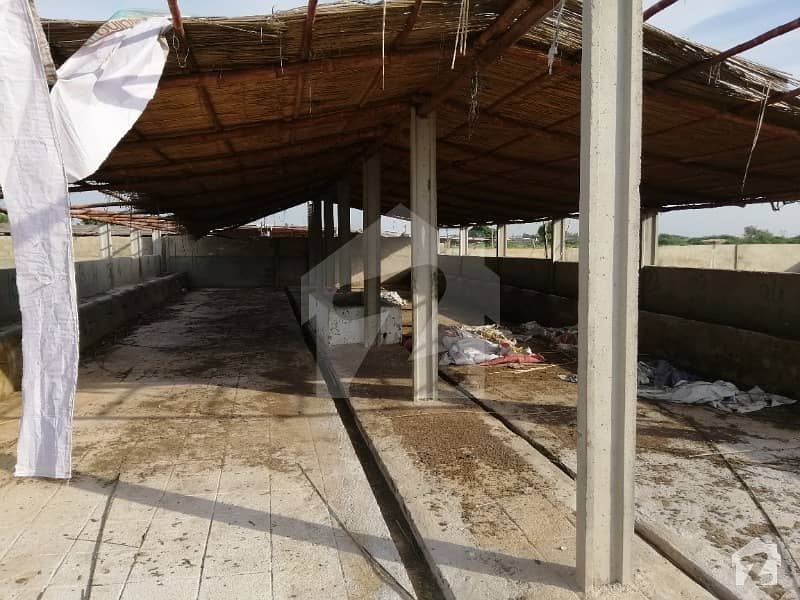 Dairy Farm  Cattle farm is available for sale Running Dairy Farm Space for 300Cows