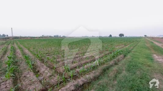 Agriculture Land Is Available For Sale In Laban Wala Tehsil Ferozwala Sheikhupura